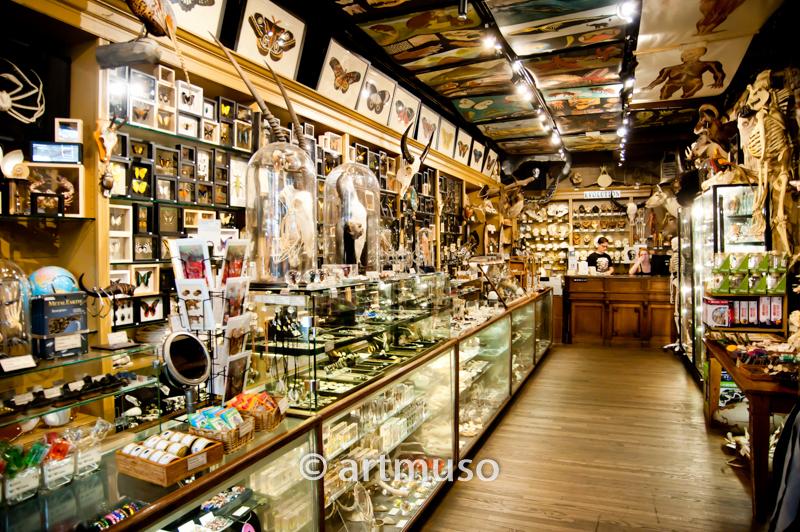 Curiosity Shop Soho